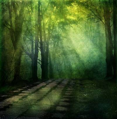 Magic backgrounds - the sun in the forest