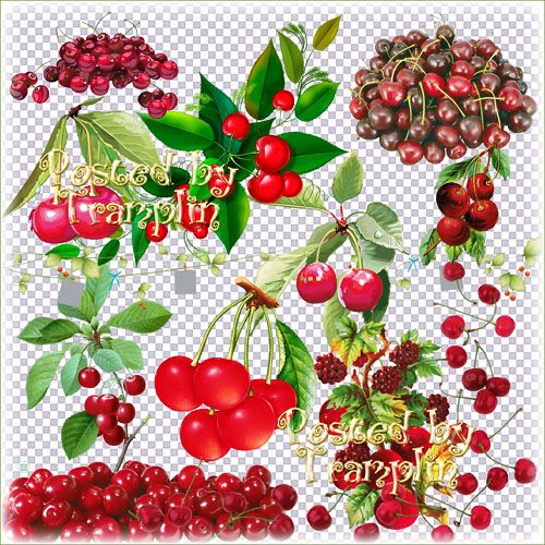 Clipart PNG Cherry on transparent background free download