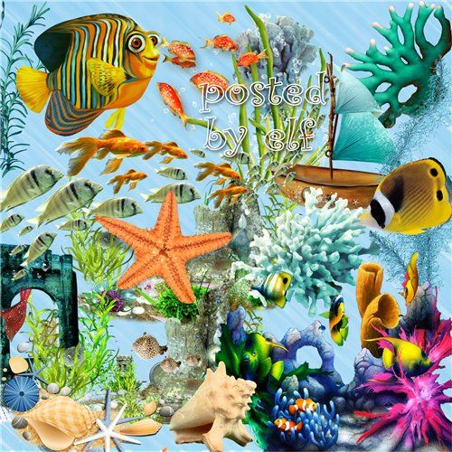 Summer sea clipart png Fish, corals, shells, algae - 106 PNG images free download