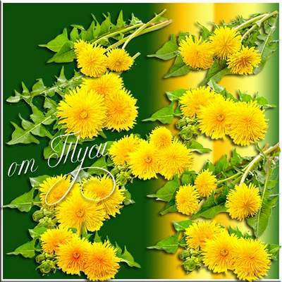 Flower clipart free psd file - Dandelion flower free download