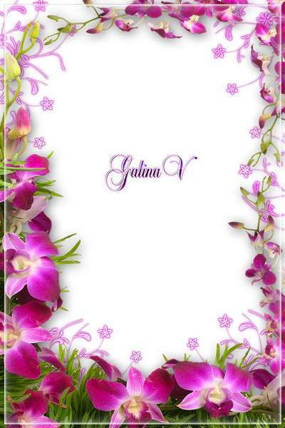 Flowery Photoshop photo frame psd png Photoframe - Pink Orchids Weaving free download
