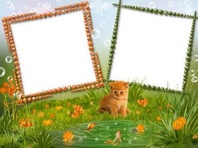 Baby Frame - Ginger cat loves fish, sits near the water all day free download