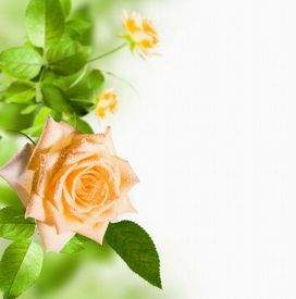 Background with flower download