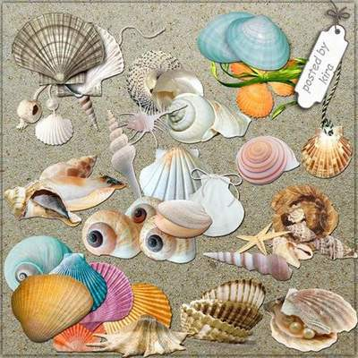 Sea Clipart png download - Seashells 225 free png images on a transparent background