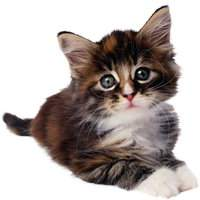 Cats Clipart download - Cats and kittens 545 free png images