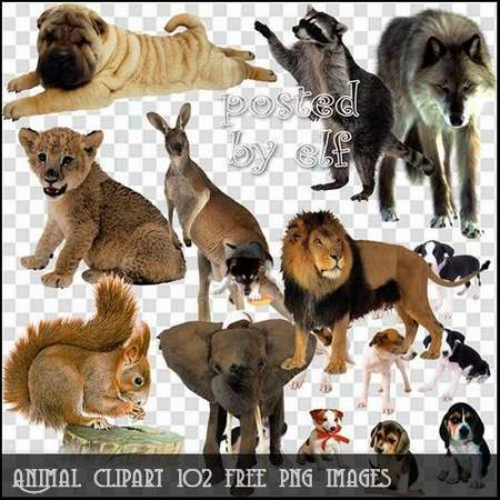 Animal clipart download - 102 free png images