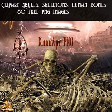 Clipart Skulls, skeletons, human bones download - 80 free png images