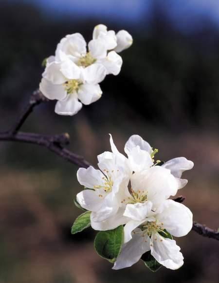 Blossoming Garden - jpeg + psd masks