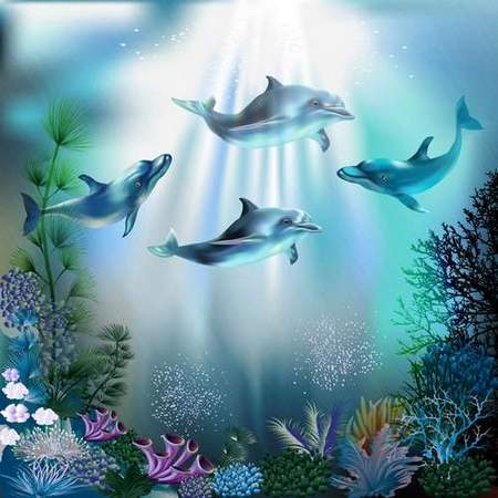 Free psd source download - Dolphins