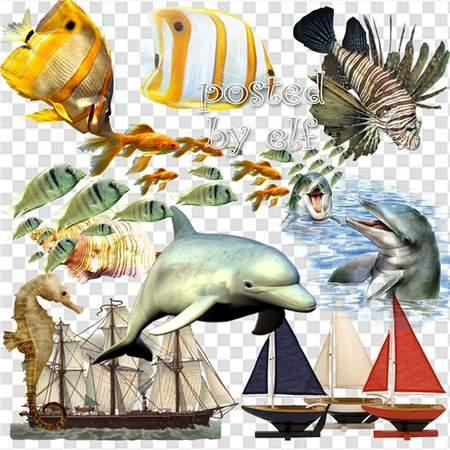 Sea clipart download - 43 free png images fish, ships and more