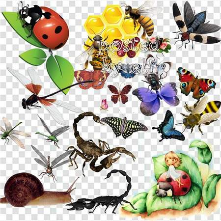 Insects Clipart download - 36 free png images