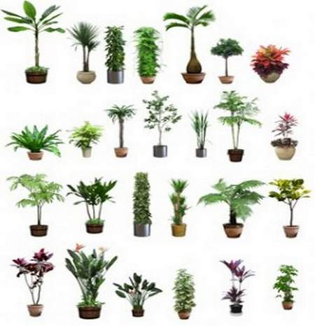 Clipart in Png plants in pots download