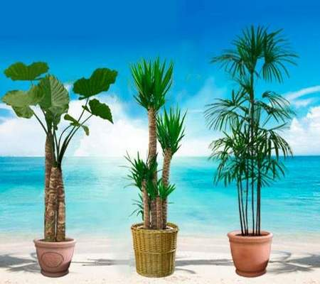Decorative trees and palm trees in pots download - 24 free png images on a transparent background