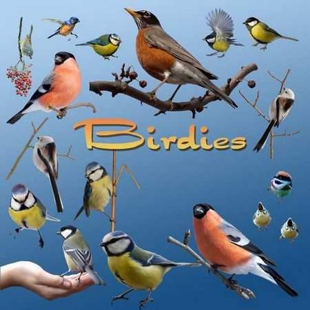 Birds psd download - free birdies clipart psd file (transparent background)