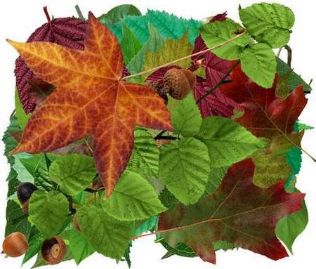 Leaves clipart download - free psd file (transparent background)
