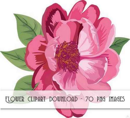 Flower clipart download - 70 png images (transparent background)