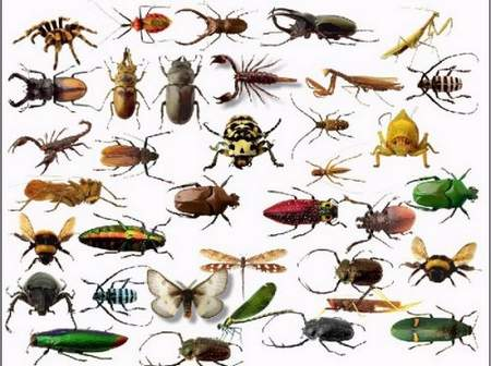 Insects Clipart download - free psd file