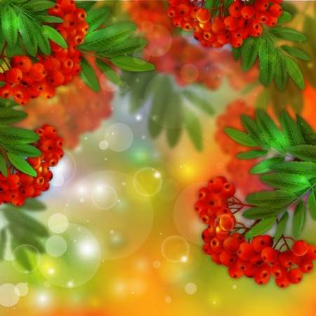 PSD background download - bunches of Rowan (free psd file)