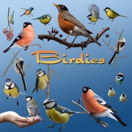 free birdies clipart psd file