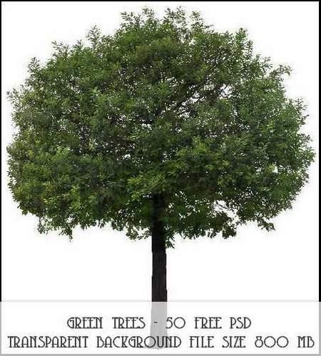 Green trees 50 free psd