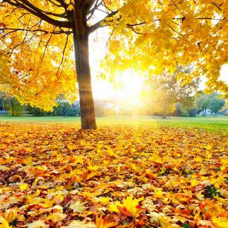 Autumn backgrounds download - raster clipart 90 JPG