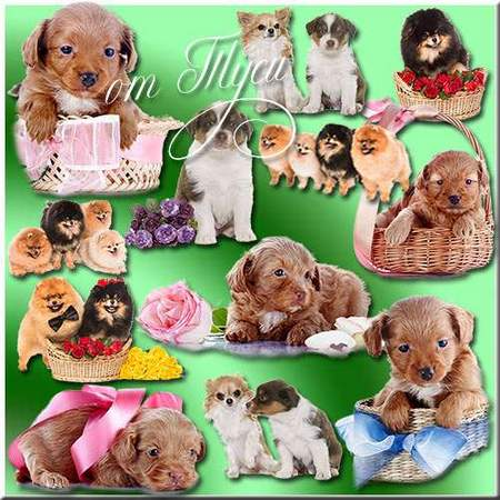 Dogs Clipart download - free psd file