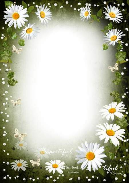 Frame for romantic photo - Tender petals of white daisies