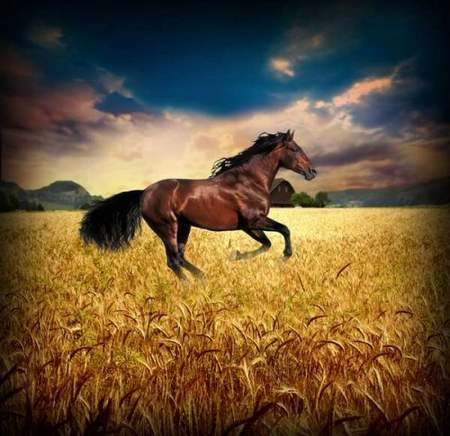 Stallion - free psd template download