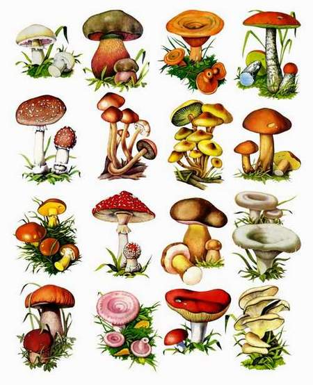 Mushrooms clipart png format on a transparent background free fownload