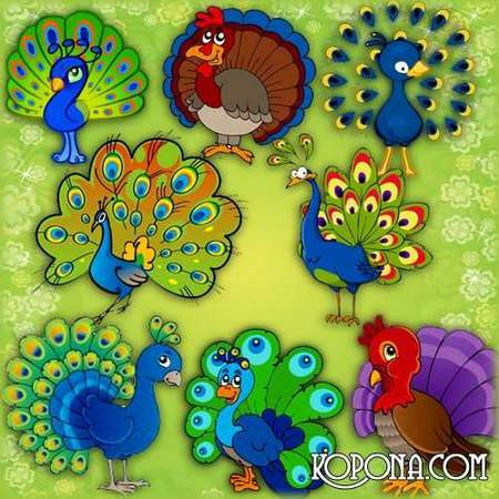 Peacocks Clipart download - free 13 png images (transparent background)