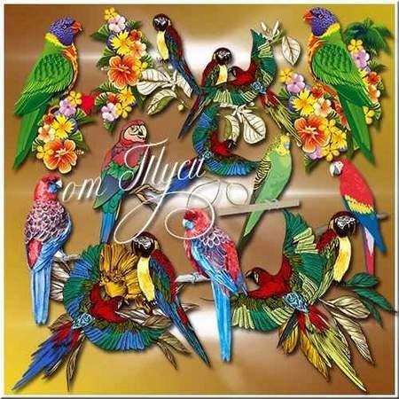 Parrots clipart psd download