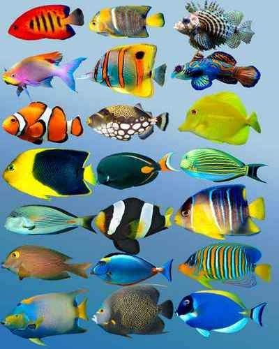 Tropical fish psd - free psd (23 layer), transparent background, free download