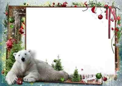 Christmas Photo frame Polar bear ( free photo frame psd + free 4 photo frame png, free download )