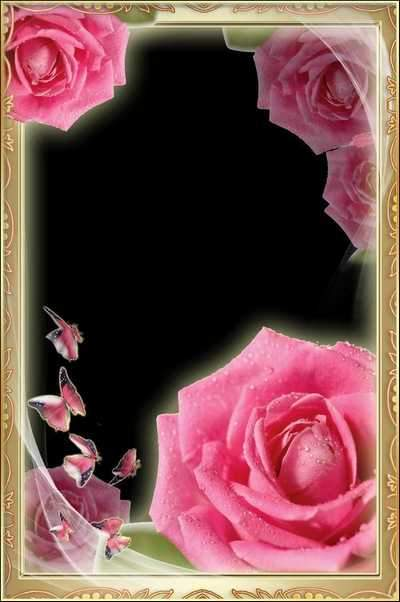 Flowery Photoframe Set - Luxury Roses ( free 3 photo frame psd + free 5 photo frames png, free download )