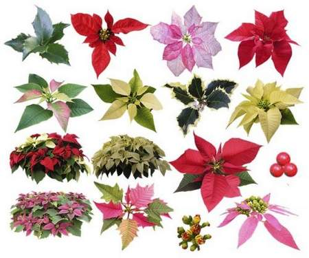 Plants psd, Flowers in a pot psd