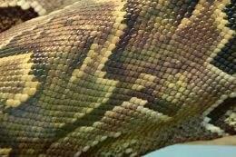 Textures, backgrounds - Snakeskin