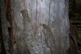 Texture of tree bark ( free textures, free download )