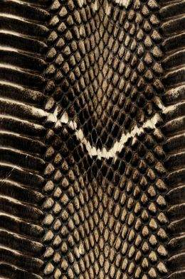 Snake skin texture ( free textures, free download )