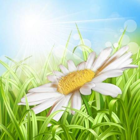 Multilayer backgrounds psd - Daisies - gentle creatures