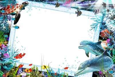 Sea Photo Frame psd + Sea Photo Frame png - Secrets of the underwater world