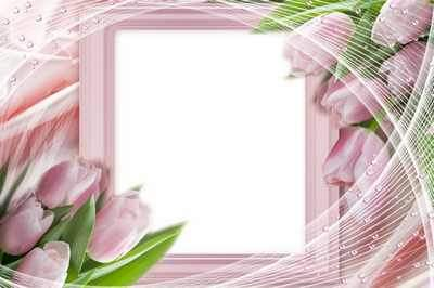 Flower Frame for photoshop - Pink tulips ( free Flower photo frame psd, free download )