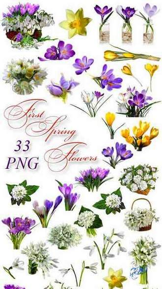 First Spring Flowers png images on a transparent background: snowdrops png, crocuses png, pasque png ( free 33 png images, ~ 2500 x 7100 px, rar 290 mb, free download )