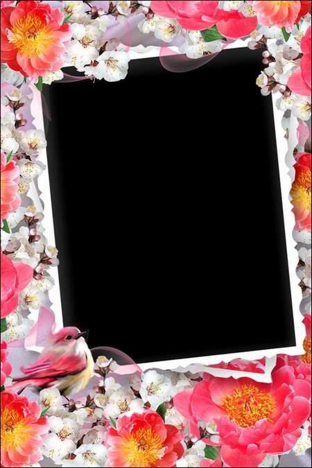Frame with roses - Dasha traveler
