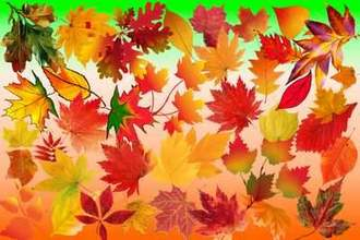 Autumn leaves psd + Autumn leaves clipart psd ( free psd file, 40 layers, transparent background, free download )