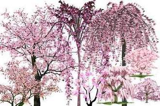 Trees in pink bloom clipart psd download ( free clipart psd, transparent background, free download )