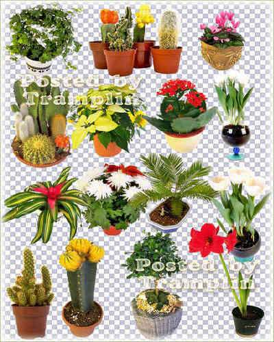 Flowers in pots png, decorative trees in pots png, cactus in pots png images