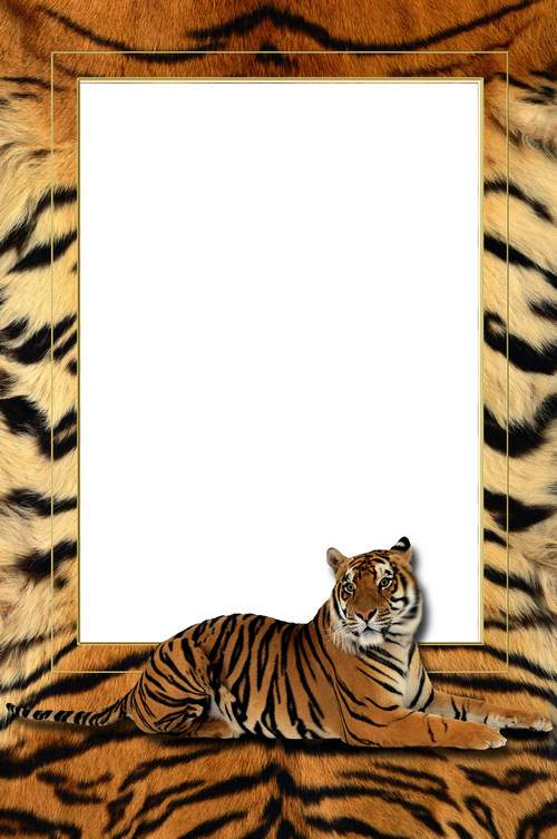 Men photo frame psd - My tiger