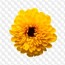 Flower png - 119 PNG images of flowers on a transparent background, ~ 3156x3156 px