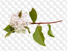 Free png images Flowers and tree branches with flowers 193 PNG files - Download
