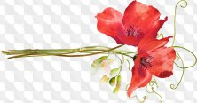 56 PNG images - Composition with flowers, flower clusters png on a transparent background